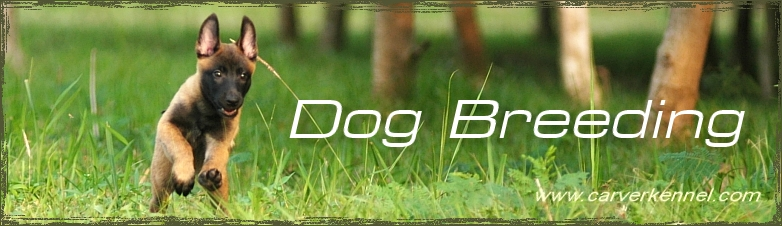 CARVER KENNEL Dog Training | Dog Breeding